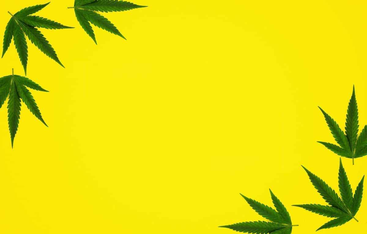 Yellow cannabis leaf background